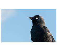 Jackdaw (Corvus monedula) by stuwdamdorp