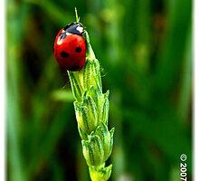 Ladybug by www4gsus