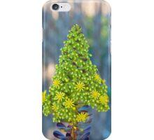 Flor de Aeonium arboreum (III) iPhone Case/Skin