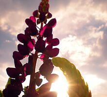 to the heavens above by JackEzra