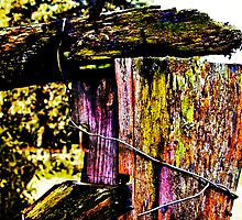Burnt Fence Posts by Peter Evans