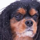 King Charles Spaniel With Snowflakes by daphsam