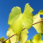 Vine Leaf by LeeoPhotography