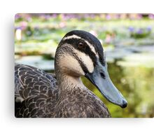 Pacific Black Duck - portrait Canvas Print