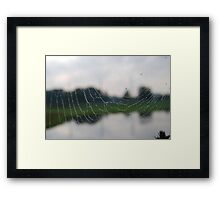 Orb Weaver Web on Reflected Image Framed Print