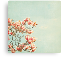 Pink Magnolia Flowers on Aqua Blue Green and French Script Canvas Print