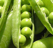 Fresh open green pea pods in sunlight by KerstinB