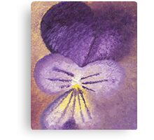 Oil painting of Viola Tricolor - Heartsease  Canvas Print