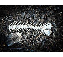 Bones Photographic Print