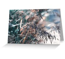 Silver Grass After Rain  Greeting Card
