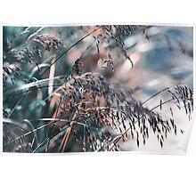 Silver Grass After Rain  Poster