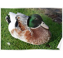 A Sitting Duck Poster