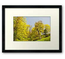 Green spring trees view Framed Print