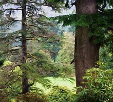 Autumnal Trees in Benmore Botanical Garden. Scotland by JennyRainbow