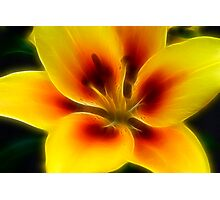 Lilliy Of Gold Photographic Print