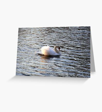 Lonely Swan Greeting Card
