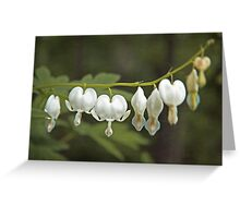 White Bleeding Hearts Dicentra Hunter Green and Chartreuse Greeting Card