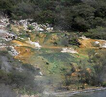 Mud Flats@Waimangu by Tony Waite