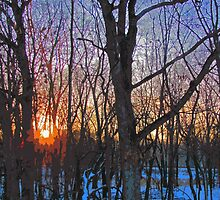 Sunrise Behind The Trees Digital Painting From Photograph by Adri Turner