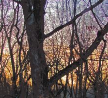 Sunrise Behind The Trees Digital Painting From Photograph Sticker