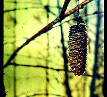 Silver Birch by housenbaby