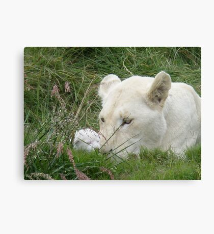Newborn Cub Canvas Print
