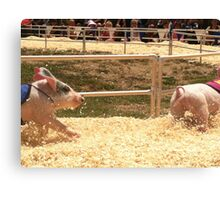 Pig Races Canvas Print