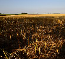Harvested Field by signsoflife