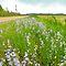WILDFLOWERS ALONG A ROADWAY