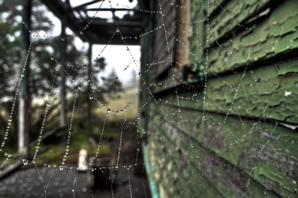 Charlotte's Web by Kevin  Kroeker