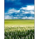Blue Sky Fields by Kirk  Hille