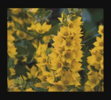 Small Yellow flowers 3 Kids Clothes