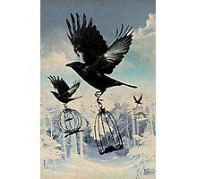 Crow thief Photographic Print