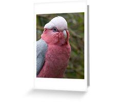 Pink Galah Greeting Card