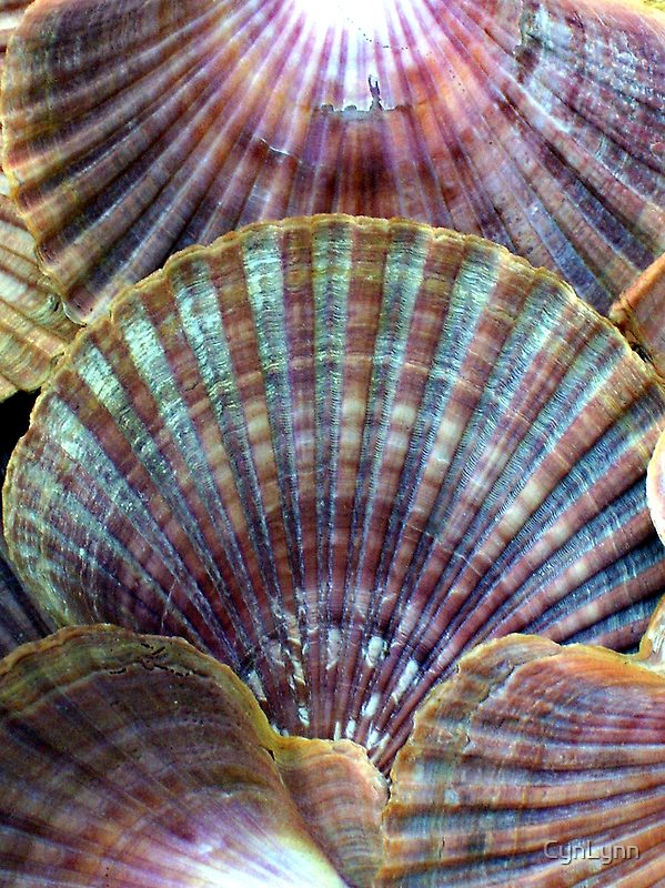 Vintage Sea Shells Revisited by CynLynn
