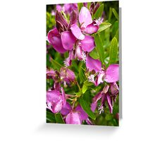 Unknown Flower 3 Greeting Card