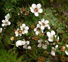 Unknown Flower 4 by beeden