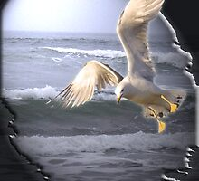 Soaring Seagull over the Ocean by Diana Rogers