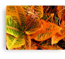 Red Yellow Green: I Canvas Print