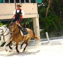 Horse show at Punta Cana, Dominican Rep by chord0