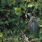 NIGHT HERON by Chuck Wickham