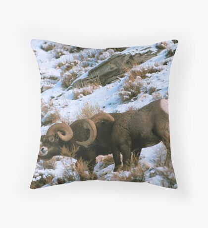 BIGHORN RAMS Throw Pillow