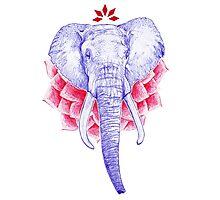 Zen Elephant Photographic Print