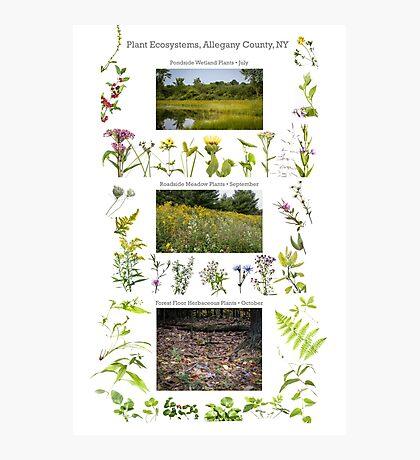 Plant Ecosystems Photographic Print