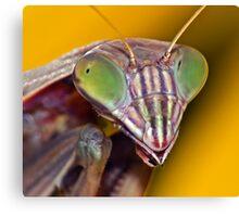 Mantis(4) Canvas Print
