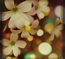 enchanted garden by Morgan Kendall