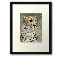 My Cheetah Love Framed Print