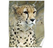 My Cheetah Love Poster