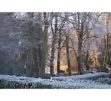 Hoar Frost at Dawn Photographic Print
