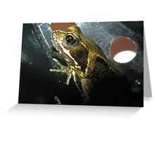 Frog in a Flowerpot Greeting Card
